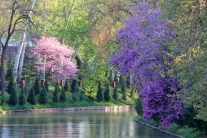 tashkent-ankhor-riverside-3